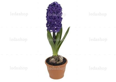 تصویر PNG گل سنبل