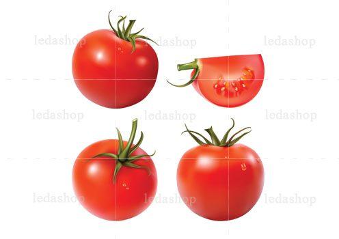 وکتور گوجه فرنگی لایه باز