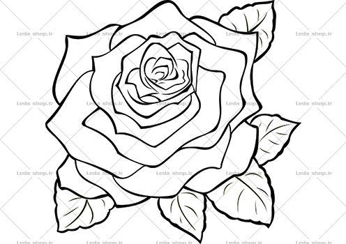 وکتور گل رز مشکی